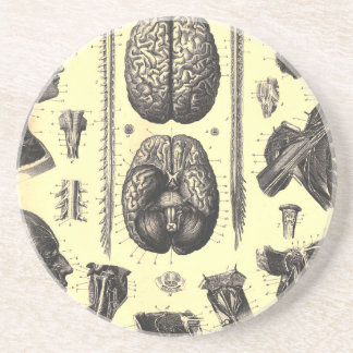 Anatomical Brain and More Coaster