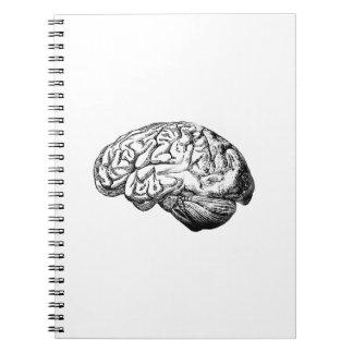 Anatomical Brain Notebooks