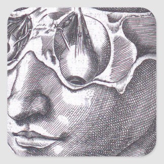 Anatomical Face with Musculature Square Sticker