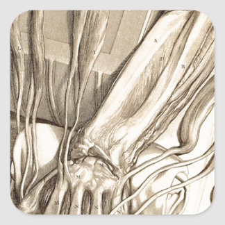 Anatomical Hand Sketch Square Sticker