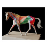 Anatomical Horse Poster