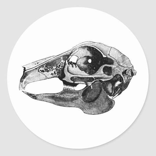 Anatomical Rabbit Skull Black and White Classic Round