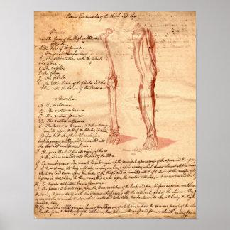 Anatomical Sketch Print