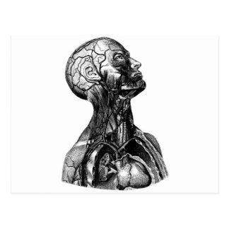 Anatomy Bust Postcard