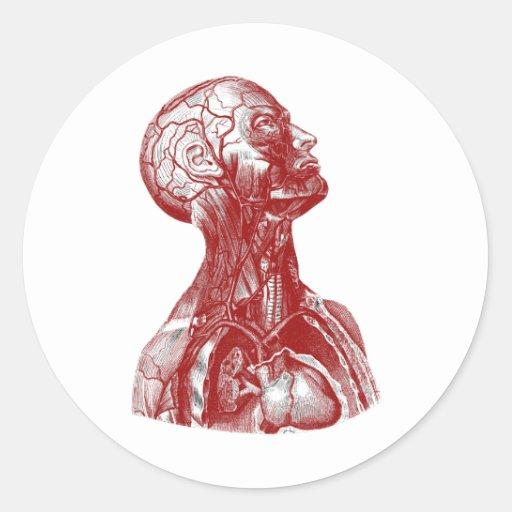 Anatomy Bust Red Round Sticker