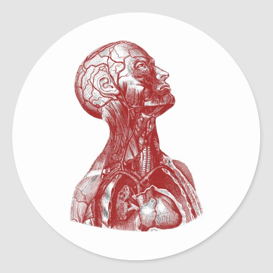 Anatomy Bust Red Round Sticker
