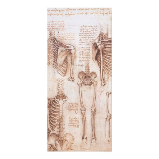 Anatomy Drawings Human Skeletons Leonardo da Vinci Custom Rack Cards