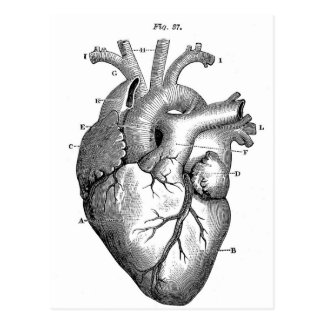 Anatomy-Heart-Images-Vintage Postcard