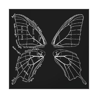 Anatomy Of A Butterfly Wing Vintage Diagram Canvas Print