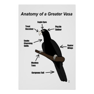 Anatomy of a Greater Vasa Parrot Poster