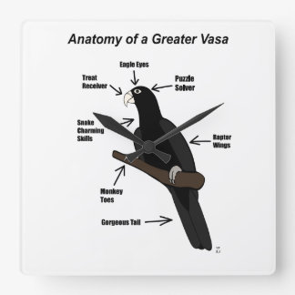 Anatomy of a Greater Vasa Parrot Square Wall Clock
