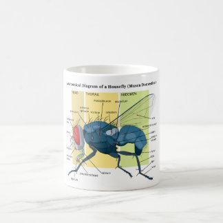 Anatomy of a Housefly Diagram Musca Domestica Mugs