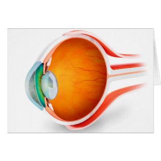 Anatomy Of Human Eye, Perspective Card