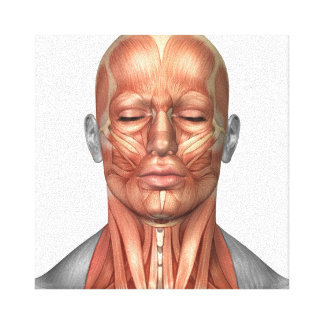 Anatomy Of Human Face And Neck Muscles, Front Canvas Print
