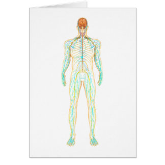 Anatomy Of Human Nervous And Lymphatic System Card