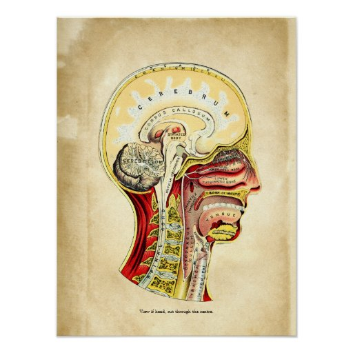 Anatomy of the Brain Posters