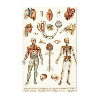 Anatomy of The Human Body Canvas Print