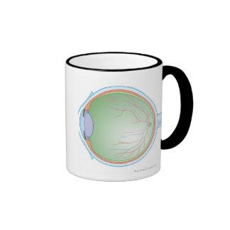 Anatomy of the Human Eye Ringer Mug