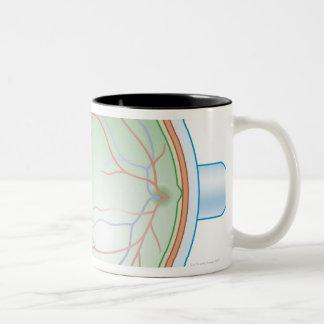 Anatomy of the Human Eye Two-Tone Coffee Mug