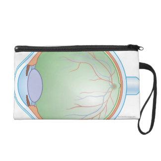 Anatomy of the Human Eye Wristlet