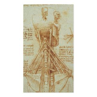 Anatomy of the Neck by Leonardo Da Vinci c. 1515 Pack Of Standard Business Cards