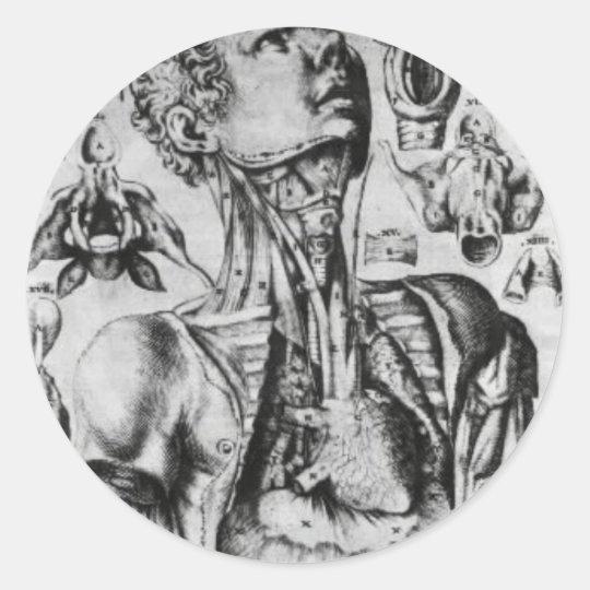 anatomy of  the respiratory system classic round sticker