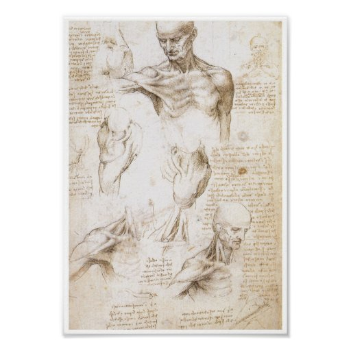Anatomy of the Shoulder, Leonardo da Vinci Poster