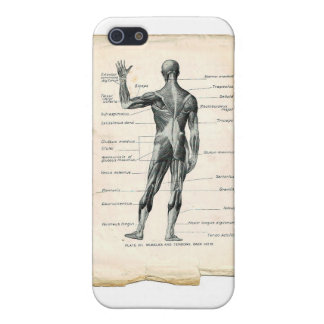 Anatomy Posterior iPhone 5/5S Cover