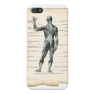 Anatomy Posterior iPhone 5 Cover