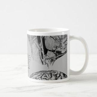 Anatomy Skull Coffee Mugs