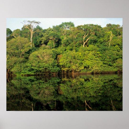 Anavilhanas, Amazonas, Brazil. Rainforest river Poster