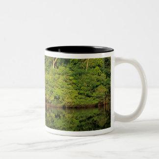 Anavilhanas, Amazonas, Brazil. Rainforest river Two-Tone Coffee Mug