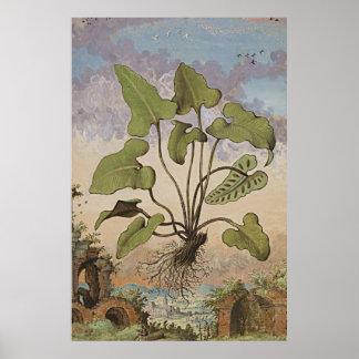 Ancient Botanical Art Hemionite Fern Poster