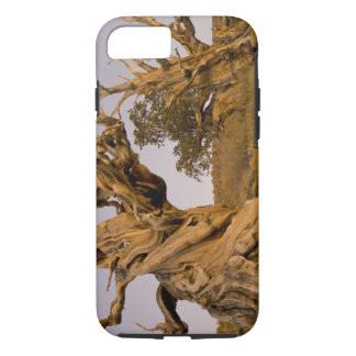 Ancient Bristlecone Forest, White Mountains, CA iPhone 8/7 Case