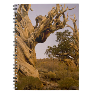 Ancient Bristlecone Forest, White Mountains, CA Notebook