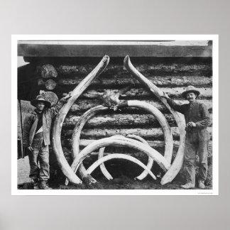 Ancient Mastodon Bones Alaska 1908 Posters
