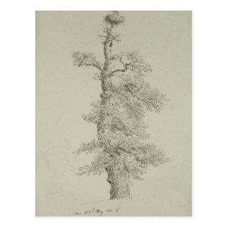 Ancient Oak Tree with a Stork's Nest Postcard