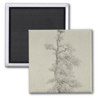 Ancient Oak Tree with a Stork's Nest Square Magnet