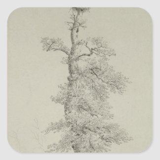 Ancient Oak Tree with a Stork's Nest Square Sticker