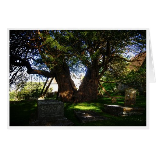 Ancient Yew Greeting Cards