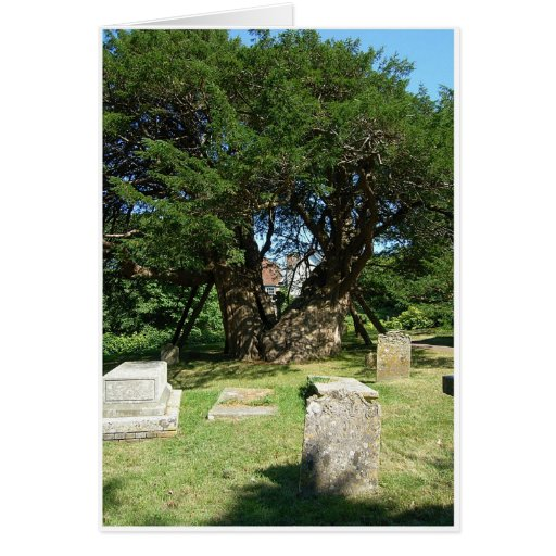 Ancient Yew Tree Greeting Cards