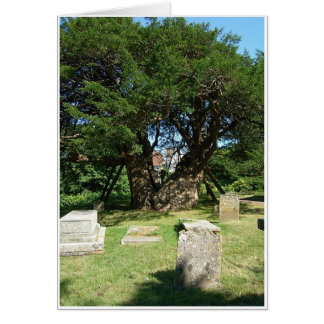Ancient Yew Tree Greeting Card