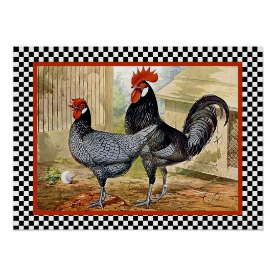Andalusian Chickens in Farm Poster