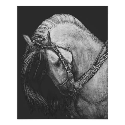 Andalusian Horse Poster
