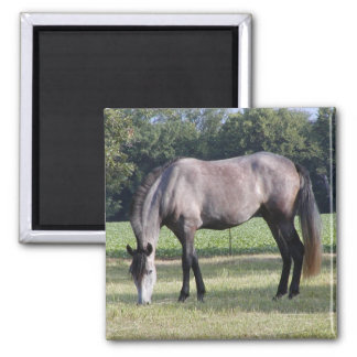 Andalusian Mare Magnet