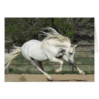 Andalusian Stallion running, PR Greeting Card