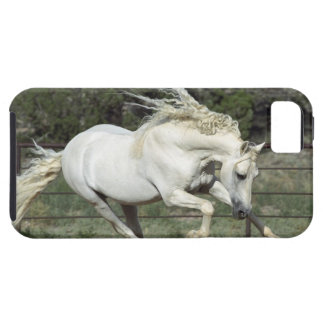 Andalusian Stallion running, PR iPhone 5 Case
