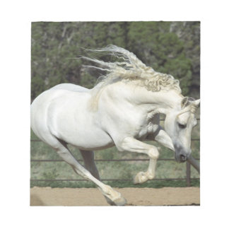 Andalusian Stallion running, PR Notepad