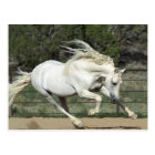 Andalusian Stallion running, PR Postcard