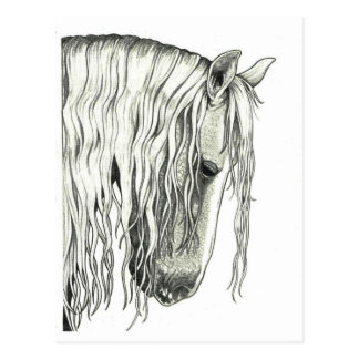 Andalusian True Romantic Horse Postcard